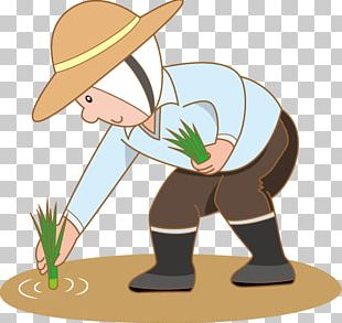 Farmer Rice Paddy Field PNG
