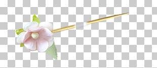 Cut Flowers Plant Stem Flowering Plant Plants PNG