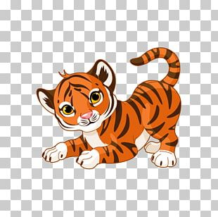 Tiger Cat Graphics Stock Photography Illustration PNG