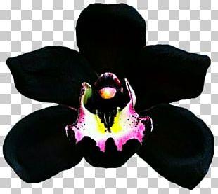 Dendrobium Orchids Boat Orchid Catasetum Tuber PNG