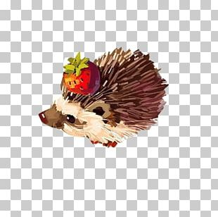 Hedgehog Paper Drawing Watercolor Painting Illustration PNG