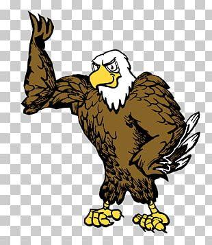 Bald Eagle Owl Hawk Beak PNG