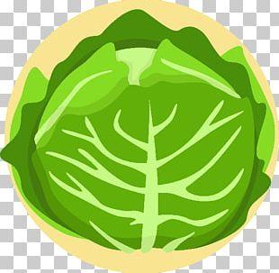 Lettuce Salad Vegetable Vegetarian Cuisine Cabbage PNG