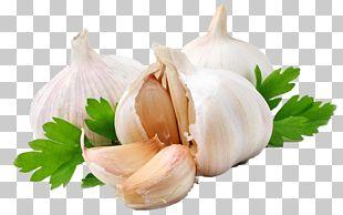 Garlic Press Shallot Vegetable Alternative Health Services PNG
