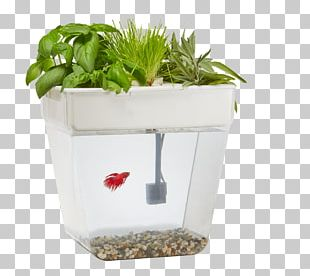 Siamese Fighting Fish Aquaponics Back To The Roots Water Garden Aquarium PNG