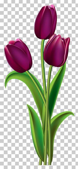 Indira Gandhi Memorial Tulip Garden Red PNG