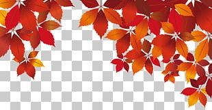 Red Autumn White PNG