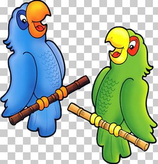 True Parrot Drawing Animation Bird PNG