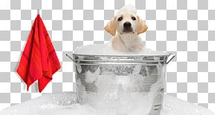 Labrador Retriever Puppy Pet Sitting Dog Grooming PNG