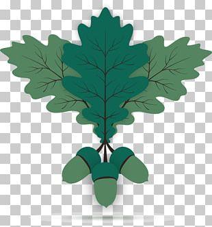 Oak Acorn Leaf Euclidean PNG