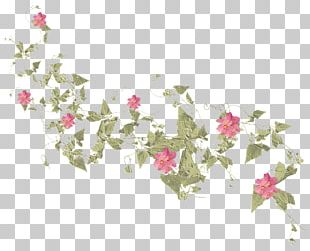 Floral Design Rose Family Petal Pattern PNG