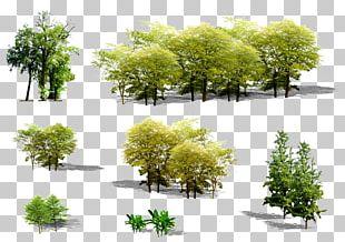 Tree Euclidean Plant PNG