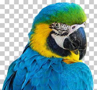 Aviarium Santiago Bird Parrot PNG