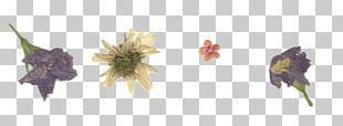 Pressed Flower Craft Paper PNG