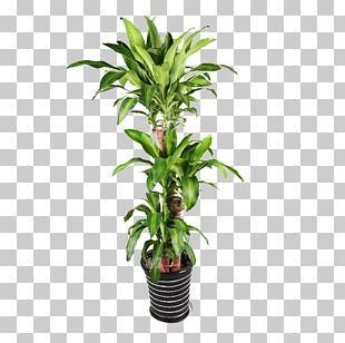 Plant Flowerpot Bonsai PNG