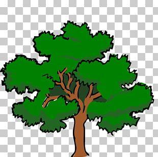 White Oak Tree Swamp Spanish Oak PNG