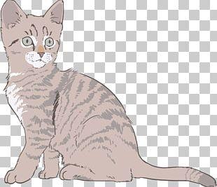 Kitten Sphynx Cat Drawing PNG