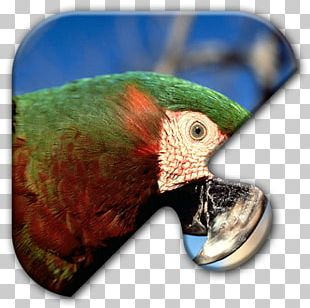 Parrot Bird Chestnut-fronted Macaw Scarlet Macaw PNG