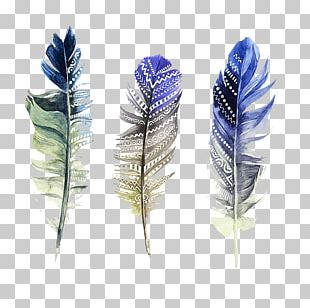 Feather Watercolor Painting Illustration PNG