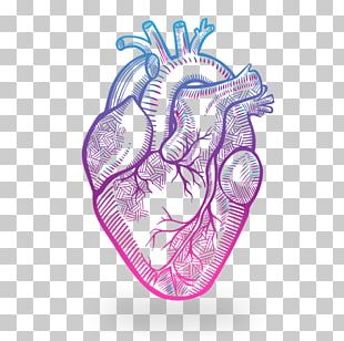 Heart Anatomy Drawing PNG