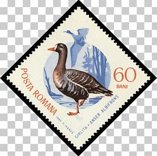 Duck Goose Sbeitla 0 Postage Stamps PNG