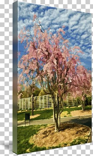 Cherry Blossom ST.AU.150 MIN.V.UNC.NR AD Sky Plc PNG
