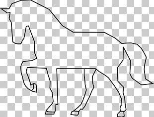 Stallion Mustang Foal Mare PNG