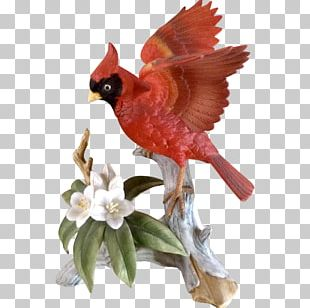 Bird Northern Cardinal Figurine Porcelain Meadowlark PNG