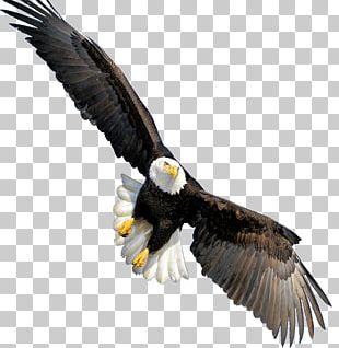 Bald Eagle Throw Pillow Beak CafePress PNG