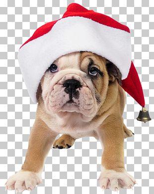 French Bulldog Toy Bulldog Santa Claus Puppy PNG