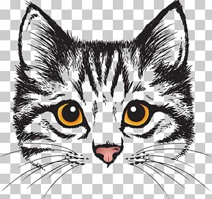 Cat Kitten Canvas Wall Decal Love PNG