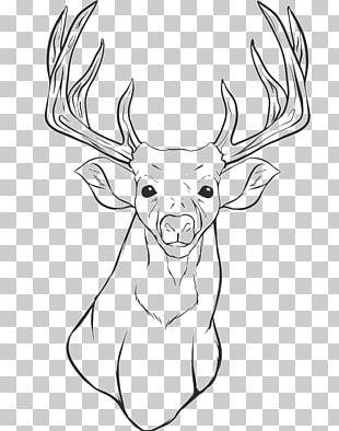 White-tailed Deer Reindeer Coloring Book Elk PNG