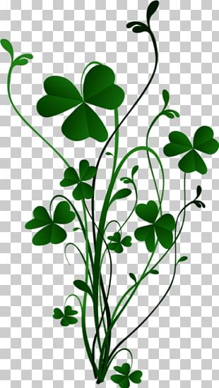 Shamrock Four-leaf Clover Stock Photography PNG