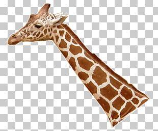 Northern Giraffe Leopard Lion Masai Giraffe Neck PNG