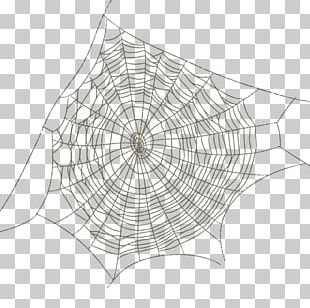 Spider Web Drawing PNG