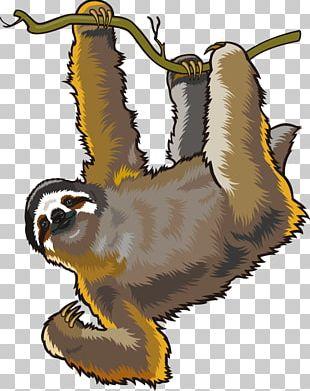 Sloth Cartoon PNG