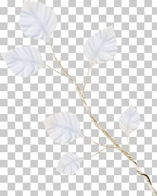 Petal Rose Family Leaf Plant Stem PNG