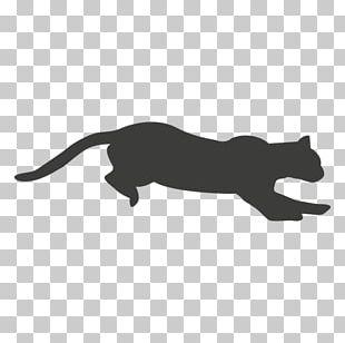 Jaguar Cat Black Panther Felidae Cougar PNG