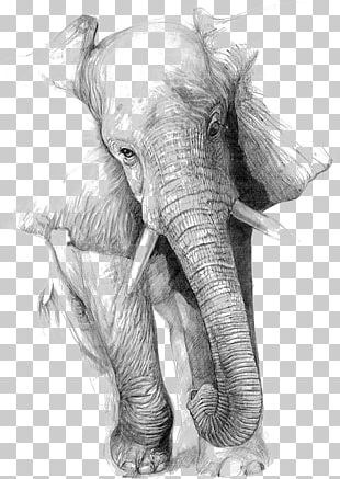 Drawing Elephant Art Pencil Sketch PNG