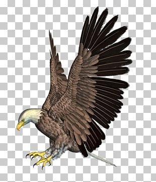 Bald Eagle Bird Flight Hawk PNG