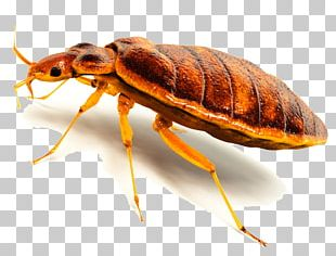 Insect Cockroach Termite Bed Bug Rodent PNG