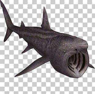 Zoo Tycoon 2 Requiem Shark Squaliformes Basking Shark PNG