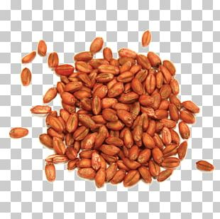 Peanut Commodity PNG
