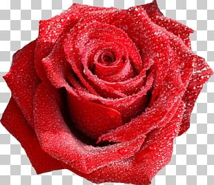 Rose Flower Bouquet Valentine's Day Red PNG