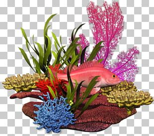 Graphic Design Plant Sea Marine Biology PNG