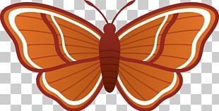 Butterfly Moth Free Content PNG