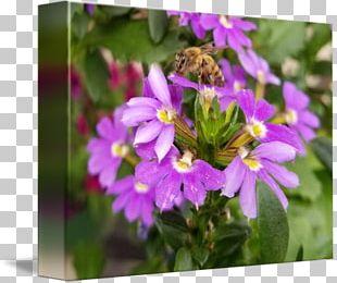 Honey Bee Nectar Vervain Pollen PNG