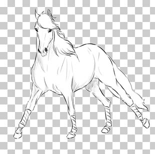 Andalusian Horse Mane Shire Horse Mustang Stallion PNG
