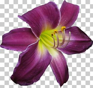 Purple Flower Icon PNG