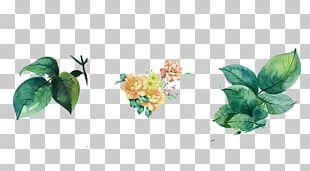 Leaf Watercolor Painting Flower PNG